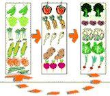 Cultivo de hortalizas: rotaciones.