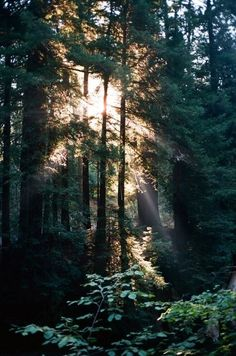 In the woods till dawn Landscape Photography, Nature Photography, Travel Photography, Beautiful Places, Beautiful Pictures, Slim Aarons, Image Nature, California Travel, Nature Pictures