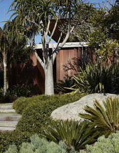 A Generous Coastal Garden Landscape Design, Garden Design, Landscape Model, House Design, Sydney Gardens, Dry Garden, Cacti Garden, West Facing Garden, Cactus