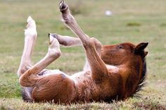 cute-baby-horse-400x266