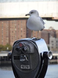 This seagull is guarding this coin-op binoculars at the South Street Seaport Mall. Well, not really - but it makes an interesting caption.