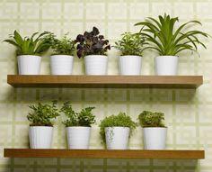 """Florile tale au intrat în repaus, o binemeritată """"vacanţă"""" după vara lungă în care au înflorit abundent. Iarna, ajută-le să îşi refacă forţele, ca să crească mai viguroase la primăvară. Apa de turbă este un adevărat balsam pentru plantele de apartament, pe timpul iernii. Spre deosebire de substanţele nutritive care sunt recomandate primăvara, când apar"""