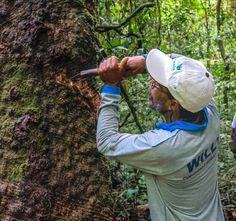 Conheça quem luta para produzir e preservar na Terra do Meio - mosaico de áreas protegidas localizada entre os rios Xingu e Iriri que abriga uma enorme diversidade socioambiental.