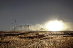 Fields of Gold  Love wind turbines!