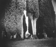 """Sally Mann - Sempervirens """"Stricta"""", 1995, from the Immediate Family series."""