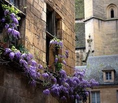 Sarlat   Dordogne (France) -