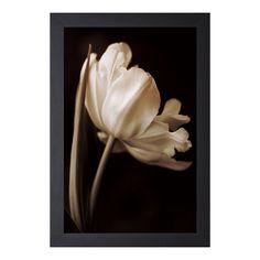 Charles Britt 'Champagne Tulip l' Framed Artwork