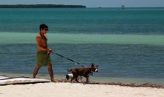Spend time with your dog on the beach in Miami