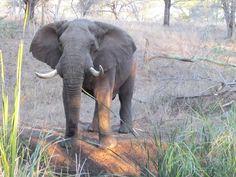 $577.169983/night - ZenZulu Safari Lodge