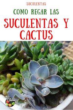 ¿Te has preguntado cuánta agua necesitan tus suculentas y cactus? En este video, voy a enseñarte cómo regar tus suculentas y cactus de forma adecuada y cada cuanto se riegan, ¡para que sigan luciendo espectaculares! El riego de suculentas y cactus es una de las partes más difíciles de cultivarlas. Cada persona que conozco y que cultiva suculentas, yo incluido, ha tenido, en algún momento, problemas con el riego, así que no estás solo aquí. #Huerto Huertourbano #Jardín #Jardinería #Suculentas Mini Cactus Garden, Garden Pots, Garden Ideas, Succulents Diy, Planting Succulents, Succulent Gardening, Cactus Y Suculentas, Winter Garden, Plant Care
