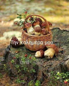 Berries, Stuffed Mushrooms, Basket, Autumn, Fall, Trees, Inspiration, Seasons, Landscape