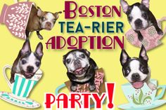 cup of cuteness into your life, this weekend June 29 & make your way to Rescue Row in San Francisco, for Muttville Senior Dog Rescue's Boston Tea-rier Party! Boston Tea, Adoption Party, Rescue Dogs, San Francisco, June, Make It Yourself, Adoption Shower