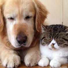 The best friends #dog #cat #animals