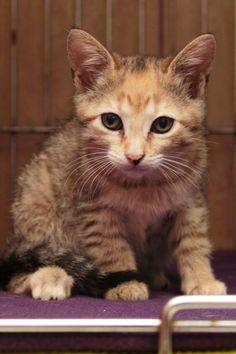Tinka - URGENT - City of Corsicana Animal Shelter, Corsicana, Texas - ADOPT OR…