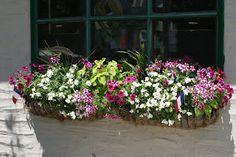 Julie's Journeys: Philadelphia: Window Flower Boxes