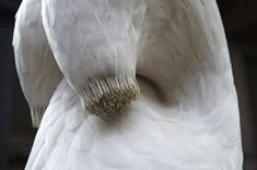 Surreal Bird Feather Sculptures by British Sculptor Kate MccGwire