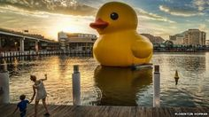 Yellow duck on tour in Sydney  / China: Giant yellow rubber duck swept away in flood -  July 2014