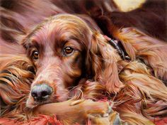 Settling Down - Irish Setter Original Painting by Artist Denise Finney