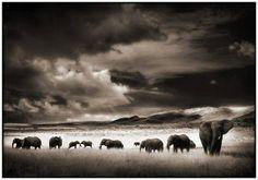 Elephant Herd by Nick Brandt.