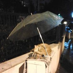 And this person decided that no cat should have to get wet.