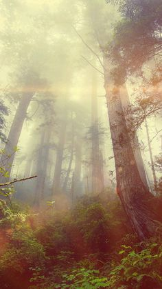 cool forest-wood-fog-flare-red-nature-green-iphone6-plus-wallpaper