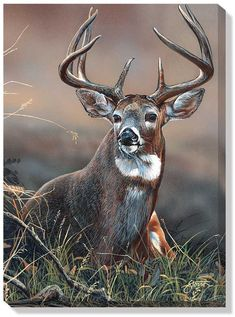 www.wildwings.com DirectionsWEB fn_webcart_zoomImage.php?img=whitetail-deer-wrapped-canvas-art-majestic-by-scot-storm-F830574465d.jpg