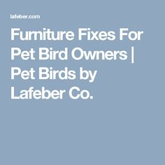 Furniture Fixes For Pet Bird Owners | Pet Birds by Lafeber Co.