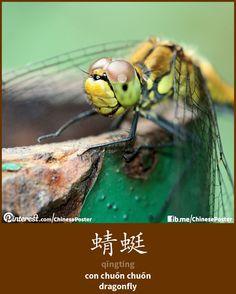 蜻蜓 - qīngtíng - con chuồn chuồn - dragonfly