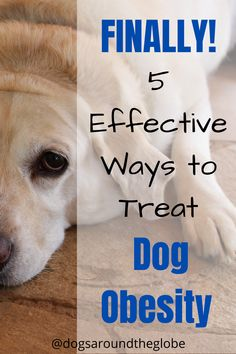 What causes dog obesity? How do I know if my dog is obese? What are some effective dog obesity treatment tips? Here are the answers!