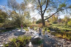 At Michael Van Valkenburgh Associates, we are inspired by the power of landscape architecture to deliver beauty in its many forms: rational, lyrical, and exuberant. Landscape Concept, Landscape Architecture, Landscape Design, Rain Garden, Water Garden, Parque Linear, Wetland Park, Sewer System, Water Management
