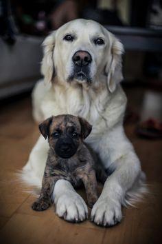 handsomedogs:  Zsofia Zsemberi|Esmé and Bori.jpg