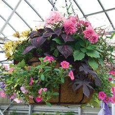 hanging basket ideas | revolutionary new container system of side planting hanging baskets ...