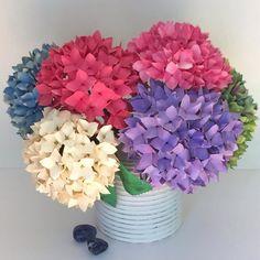 Hydrangeas in various colors