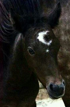 Look at this foal's marking! It's a moon and star! Baby Horses, Cute Horses, Horse Love, Wild Horses, All The Pretty Horses, Beautiful Horses, Animals Beautiful, Horse Pictures, Animal Pictures