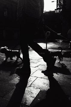 Dog walk on uvejota.tumblr.com