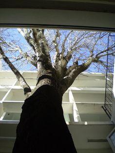 @bufondedios @llegimipiulem gràcies! I què em dieu de la casa #Curutchet de #LeCorbusier, pensada també per a allotjar un arbre Le Corbusier, Houses, Spaces, Architecture, Design, Arquitetura, Silver, Argentina, Homes