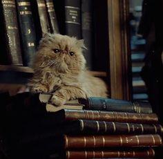 Aww Crookshanks and books. Hermione s environment xD Mundo Harry Potter, Theme Harry Potter, Harry Potter Characters, Harry Potter World, Harry Potter Hogwarts, Harry Potter Cat, Hermione Granger, Draco Malfoy, Hermione's Cat