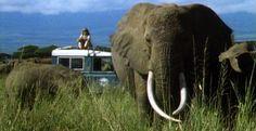 Echo: An Elephant to Remember Elephant Family, Elephant Love, Ivory Trade, Gentle Giant, African Elephant, Wildlife Photography, Elephants, Kenya, Safari