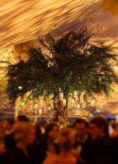 How stunning is the lighting projected on the roof of this tent! Not to mention how beautiful are the lanterns hanging on the tree.