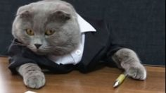 "Bossulica at ""Ham talent"" - the cat who has a human job: communication manager; income- 200 eur"