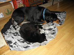 This is Rowdy our big dog and Fang our cat