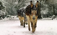 """Our pet donkeys, Zeek and Curley May, enjoyed a rare Southern snow day,"" says Don Contreras."