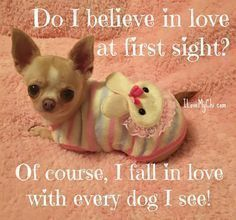 Especially when it's a Chihuahua #Chihuahua