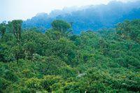 Altiplanos de Colombia - Colección Ecológica del Banco