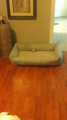 My dog Maibels new bed. Hand sewn.