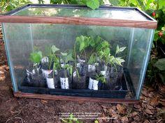Aquariums make great little greenhouses