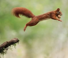 Squirrel Going Nuts by Julian Rad