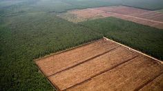 Scientific American — Trees in Indonesia are disappearing at twice the rate reported by the nation's government, according to a new analysis of deforestation rates. Scientific American, Natural, Wood, Forests, Animals, Third World Countries, Sustainable Development, Water, Paper Envelopes