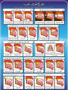 Tasheel Tadrees: Tajweed Makhaarij - مخارج الحروف Quran Tafseer, Quran Arabic, Holy Quran, How To Read Quran, Learn Quran, Islamic Posters, Islamic Phrases, Tafsir Coran, Tajweed Quran