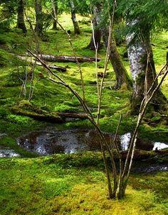 Urban Landscape, Native Landscape: Bloedel Reserve: The Moss Garden - Modern Ferns Garden, Moss Garden, Garden Fencing, Shade Garden, Natural Pond, Urban Agriculture, Bainbridge Island, Fence Landscaping, Los Angeles Area
